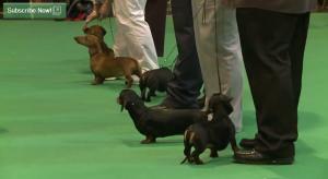 Discover_Dogs_Nov_2012