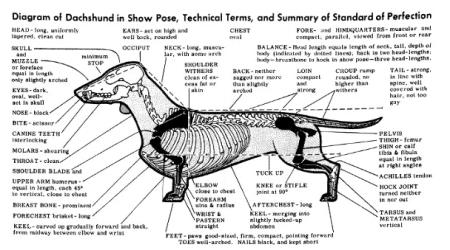 Breed Standard Skeleton