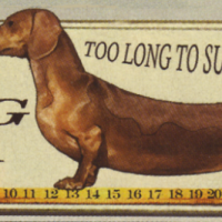"""""""Not long and not low"""" - please read the Breed Standard"""